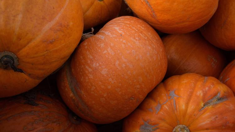 Looking for pumpkin patches and fall festivals in the DMV? We've got you covered