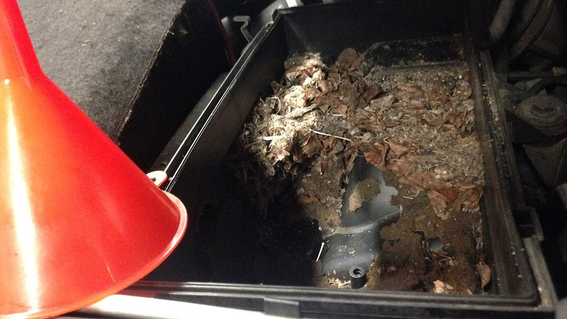 Why rats are chewing up hybrid cars | wusa9 com