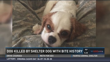 Pet killed by shelter dog in front of owner | wusa9 com