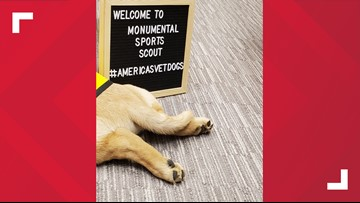 Monumental Sports welcomes new service dog in training, 'Scout'