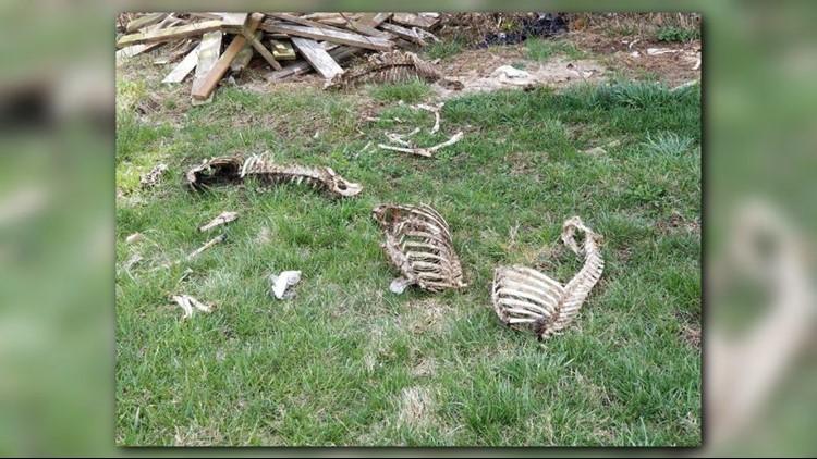 Deer Carcasses_1523047409521.png.jpg