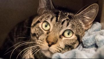 DC Humane Rescue Alliance offers free pet food for those in need
