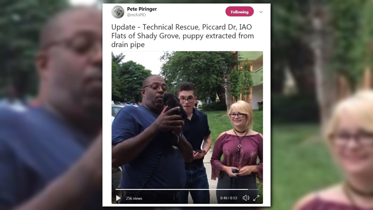 WATCH: Puppy rescued from drain pipe in Rockville | wusa9 com