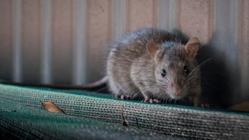 The DC Rat Map: See which neighborhoods call the most for rodent relief