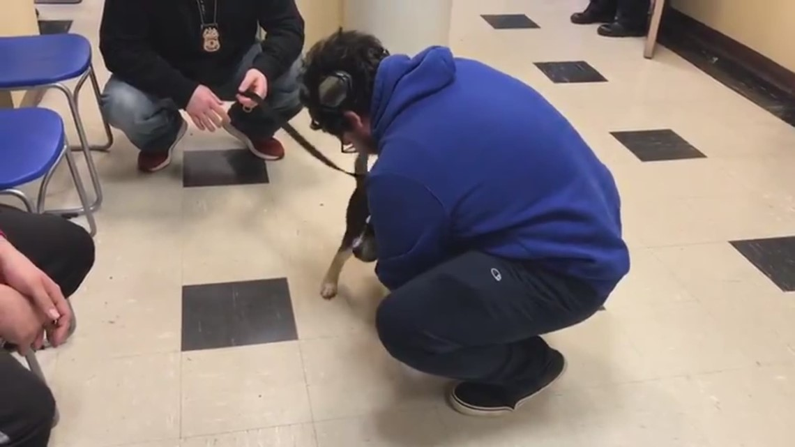 Puppy stolen at gunpoint reunited with owner
