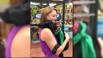 Dogs evacuated before Florence already finding homes in DC