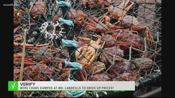 VERIFY: Are live crabs really being dumped at Maryland landfills to drive up prices?