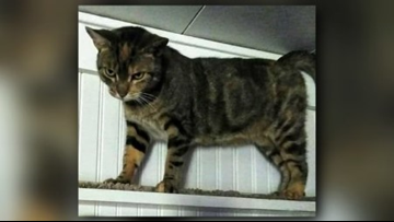 Missing cat returns home after 4 years