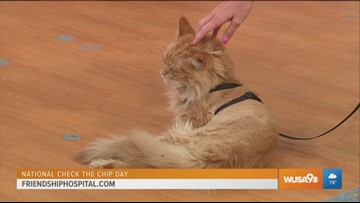 Friendship Hospital for Animals will get your pet's microchip up to date