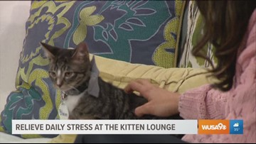 Snuggle with adorable kittens and relieve the daily stress at the Pop-Up Kitten Lounge in DC