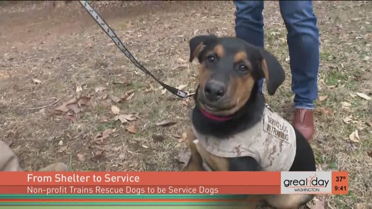 Training Rescue Dogs To Become Service Dogs Wusa9com