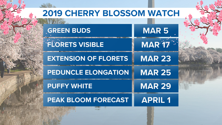 2019 Cherry Blossom Watch as of 3-29-19