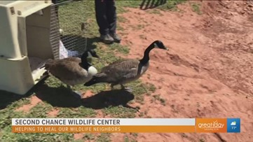 Road to a Better Community: Helping wildlife animals return to their natural habitat