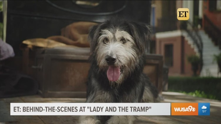 Live-action Lady and the Tramp   sneak peak