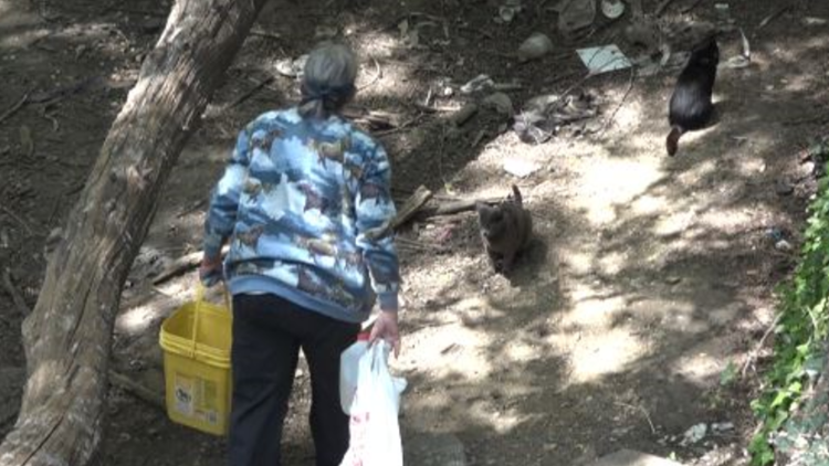 volunteer feeds feral cats