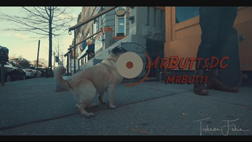 Mr. Butts - Skateboarding Pug