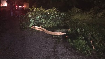 89-year-old man dies after tree falls onto him while he was standing in his driveway in Carroll County