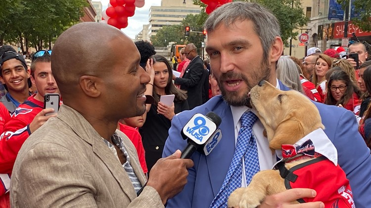 Darren Haynes meets the Capital's newest teammate, Captain, a 10-week-old yellow Lab.
