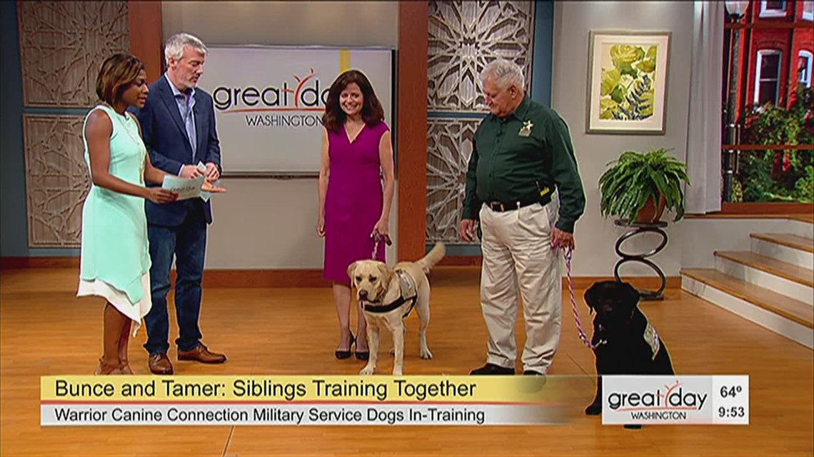 Bunce And Tamer Sibling Service Dogs In Training Wusa9com