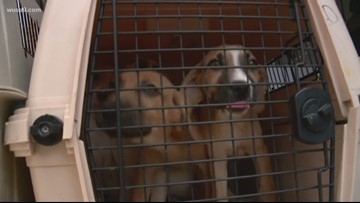 Dogs rescued ahead of Hurricane Dorian