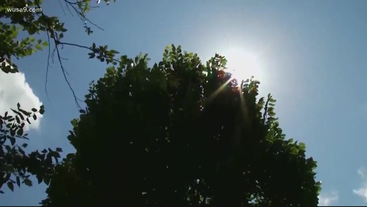 DC activates heat emergency on hot, humid first full day of summer