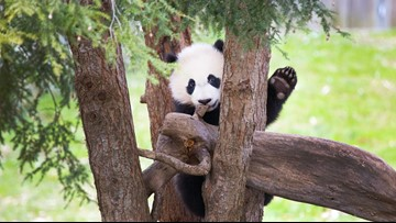Here's all the ways you can say bye bye to Bei Bei