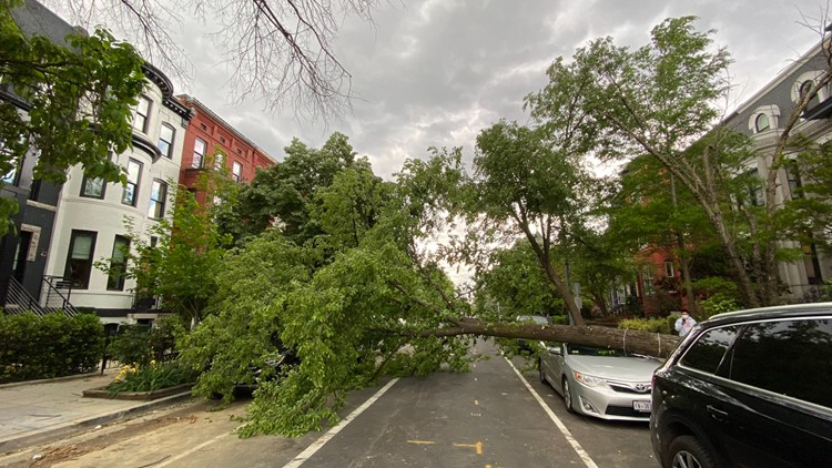 Downed trees, power outages across the DMV after severe winds