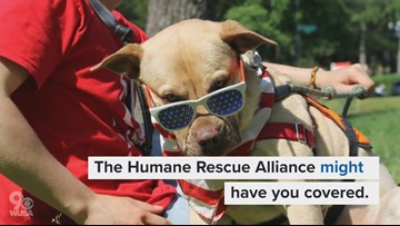 Animals for adoption - Humane Rescue Alliance