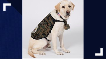 Sully the service dog has new role helping wounded vets