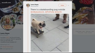 This skateboarding Pug is awesome!