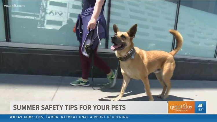 Prepare to protect pets as the heat index approaches 100 this week
