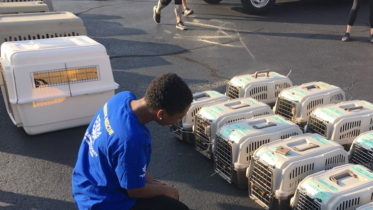 Over 140 animals were transported