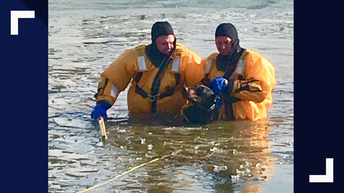 100-pound Doberman rescued from icy pond Prince George's Co.