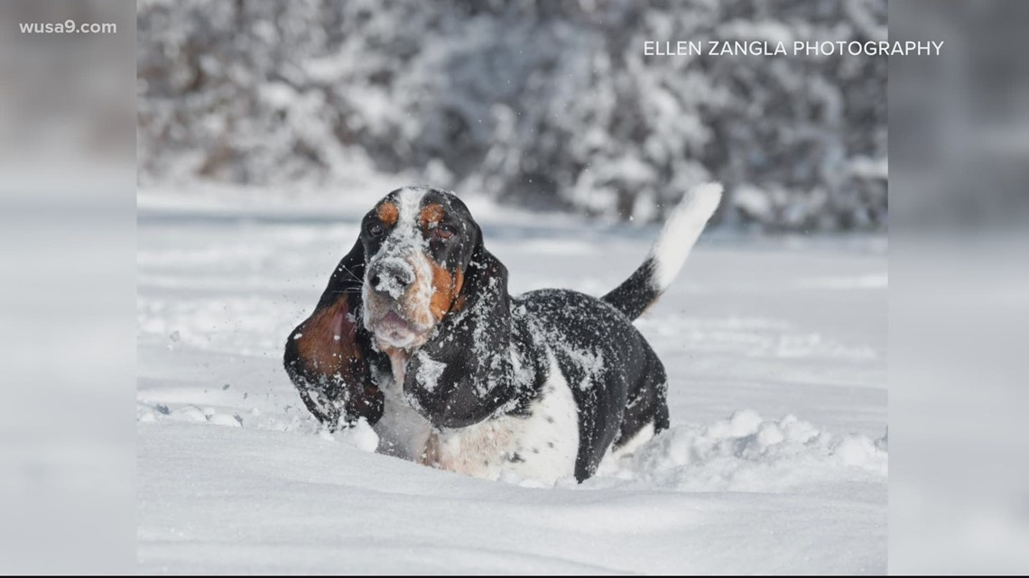 What's more uplifting than dogs in the snow | Get Uplifted