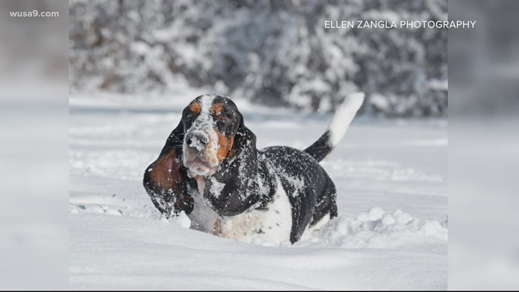 Nothing is more uplifting than dogs playing in the snow | Get Uplifted