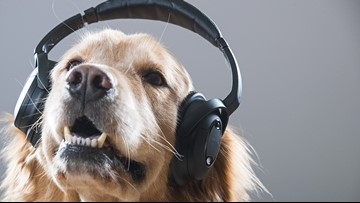 Yes, Spotify will create a personalized playlist for your pet
