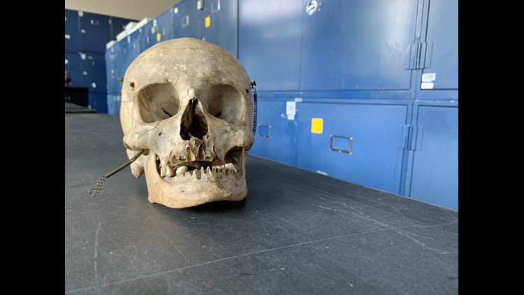 Human Skeletal Remains -- Cobb Laboratory