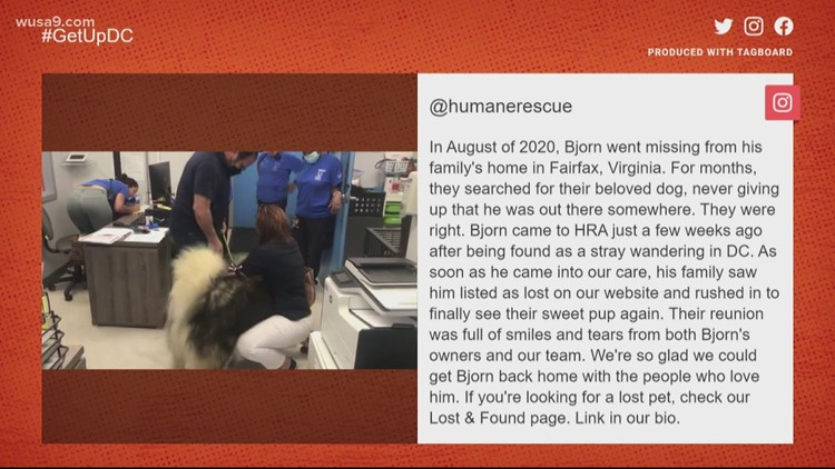 Fairfax dog reunited with family after a 10-month search | Get Uplifted