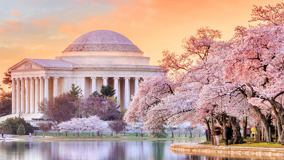 How Climate Change Is Changing When The Dc Cherry Blossoms Bloom