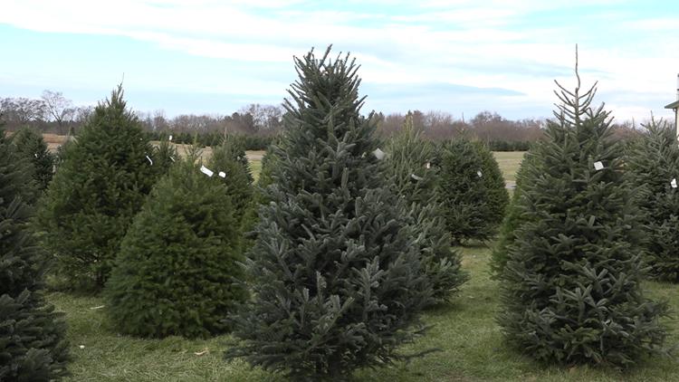 Mayne's Tree Farm
