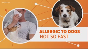 Are you allergic to dogs but still love them? There may be a solution
