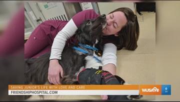 How emergency services at Friendship Hospital for Animals saved the life of Junior the dog