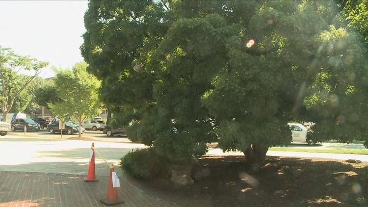 Wasp nest near Union Station