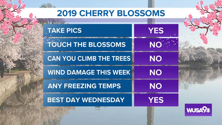 Cherry Blossom Tips