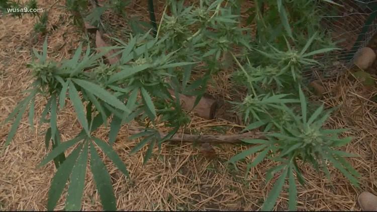 Recreational marijuana sales closer to reality in DC