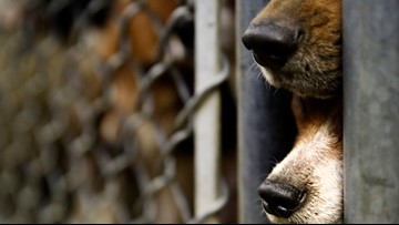 Over 100 animals rescued from non-profit after police find 'unacceptable conditions'