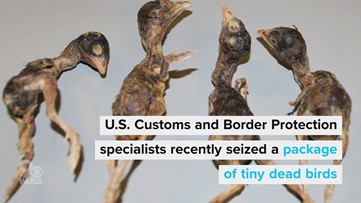 Dulles customs seizes dead birds in passenger baggage from China