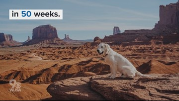 Globe-trotting dog explores 50 states in 50 weeks