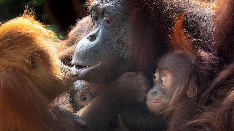 Singapore Zoo Endangered Babies
