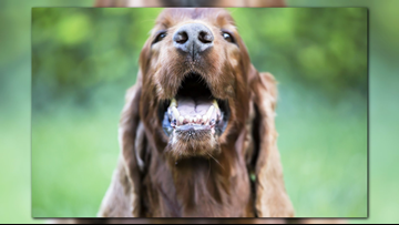 Dental care tips for your pets